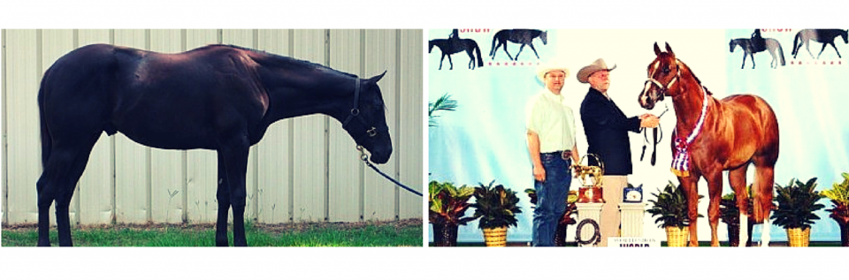 We breed many champion horses that we show in a variety of nationwide competitions & more!